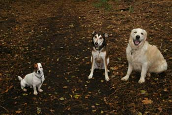A trio of dogs sitting on the ground