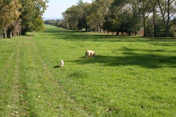 Two dogs sniffing around in a field.
