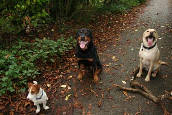 Three dogs sitting on the path with some sticks.