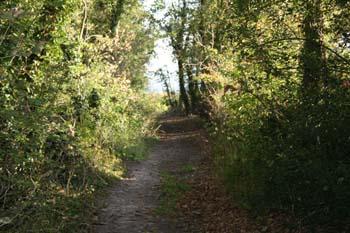 A path leading through a woodland.