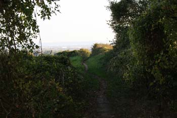 A view of a countryside walkway