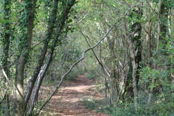 A pathway through a woodland.