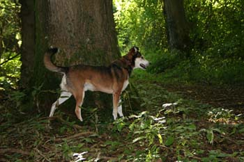 A dog stood by a tree observing something.